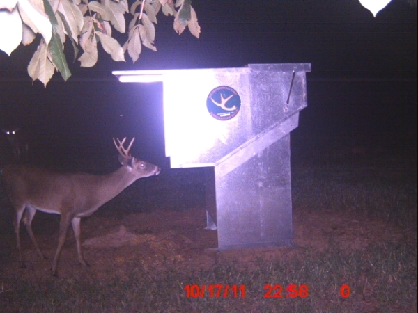 Buck At Night At the Gravity Deer Feeder
