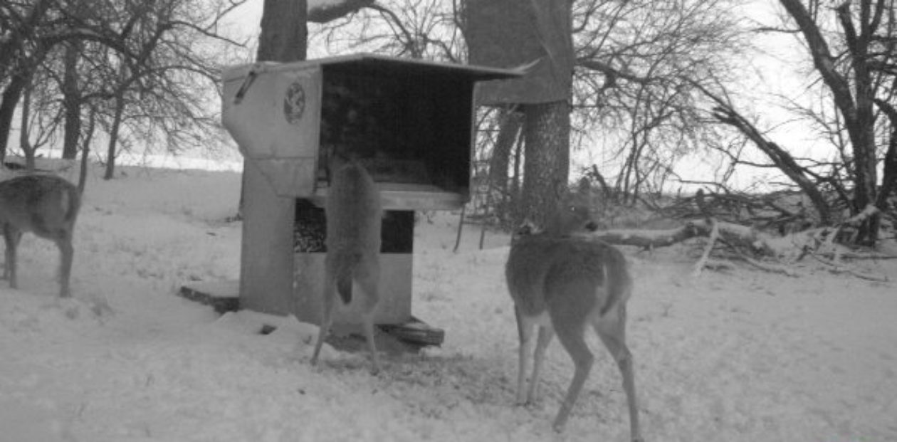 Gravity-Deer-Feeders.com